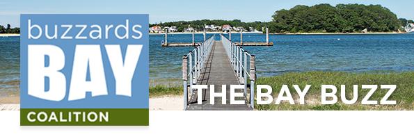 The Bay Buzz